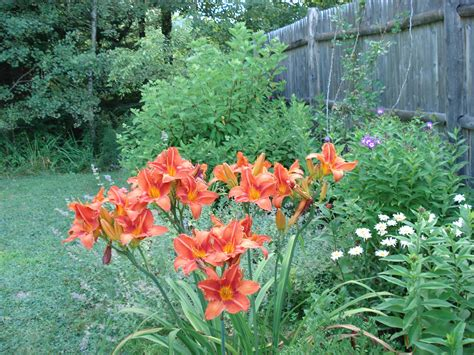 Garden Zone 9 Perennial Garden Plans Zone 9 Garden Post
