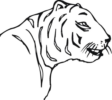 tiger outline drawing clipart best