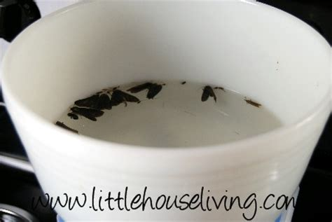 Moths In Pantry Traps by Creating A Moth Trap House Living
