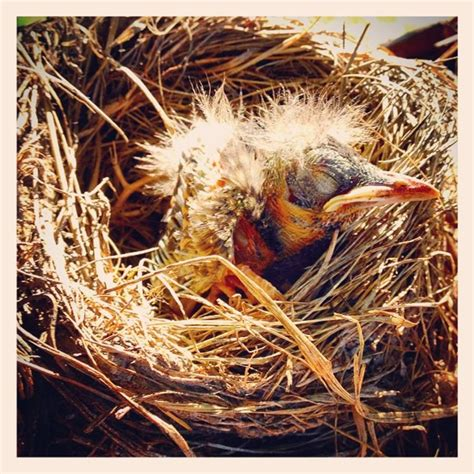 baby bird fell out of his nest hope by meg phoenix