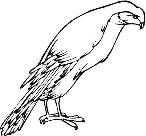 free coloring pages of robin birds