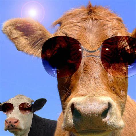 Imagenes Graciosas Vacas | imagenes de vacas graciosas