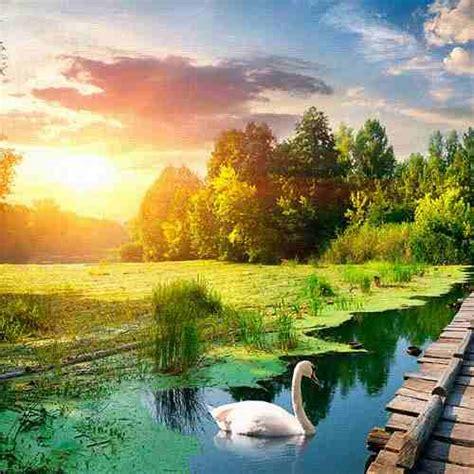 cuadros decorativos 2 pz 30x30 lago y cisnes 299 00 en - Cuadros De Cisnes