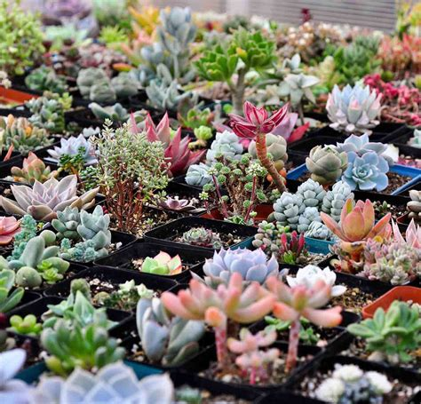 pack of 200pcs succulent plant seeds rare perennial mixed