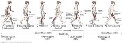pattern deviation definition gait in prosthetic rehabilitation physiopedia