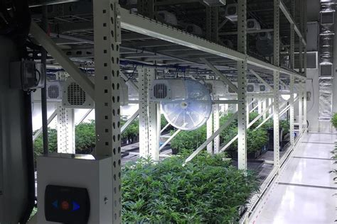 cannabis industry warehouse solutions applied handling nw