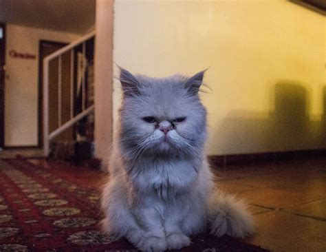 cat keeps pooping in bathtub bathtub 187 cats pooping in the bathtub marvelous bathroom