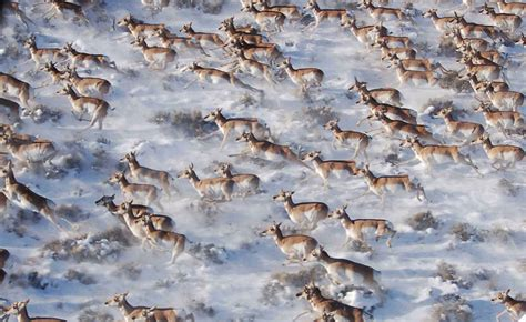 26 incredible photos of animal migration