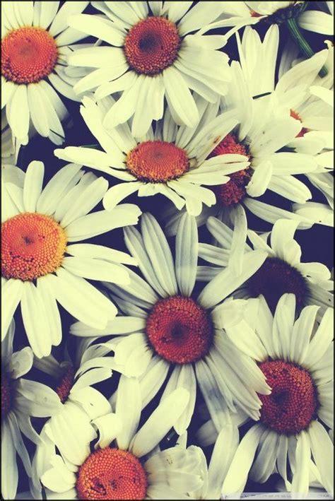 imagenes para celular de flores m 225 s de 25 ideas fant 225 sticas sobre fondos de pantalla