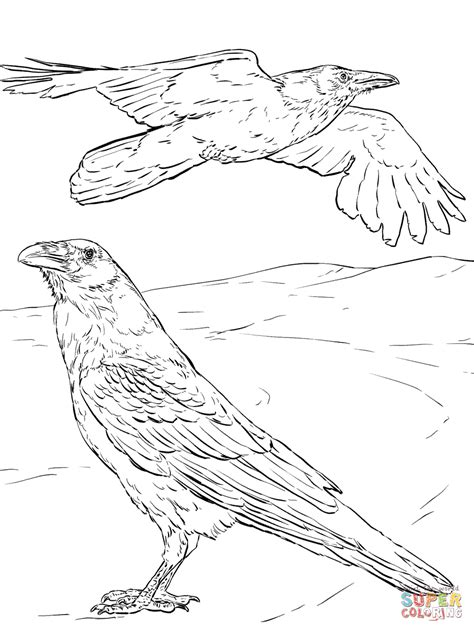 Common Raven Coloring Page Free Printable Coloring Pages Ravens Coloring Pages