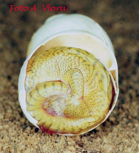 geco alimentazione club acquariologico erpetologico barese phelsuma