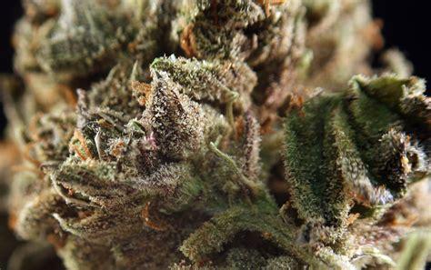 The Conter Detox That Works For Marijuana by Marijuana Detox Methods That Actually Work