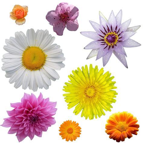 printable real flowers isolierte blumen clipart kostenloses stock bild public