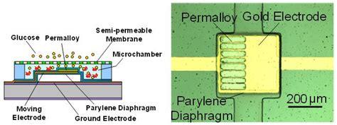 Bio Memes - bio memes 28 images microarray wikipedia bio mems