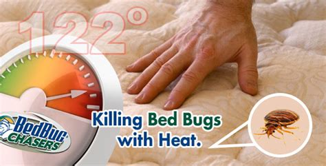 will heat kill bed bugs rated 1 bed bug heat treatment quad cities ia il