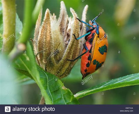 colorful bugs colourful bugs stock photos colourful bugs stock images