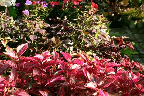 colorful plants for a shady area gardening plants pinterest