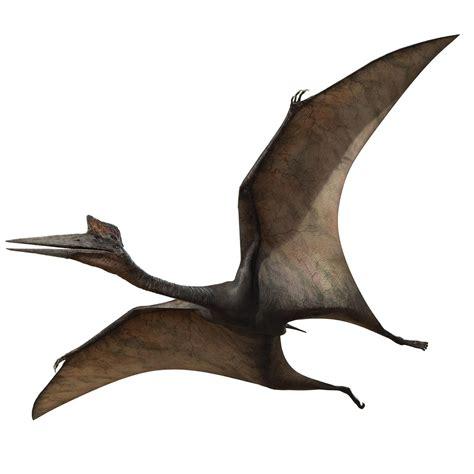 dinosauro volante l histoire de la terre en 1 an albireo78