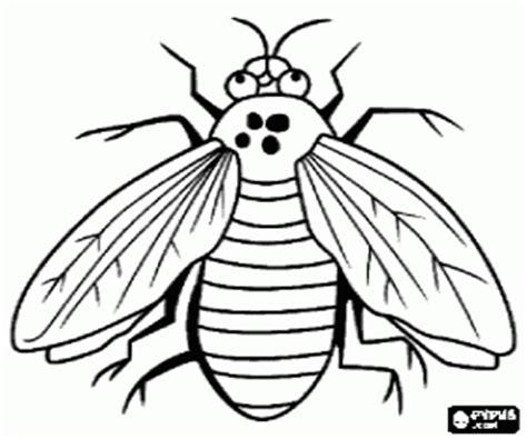disegni di insetti da colorare e stampare 2