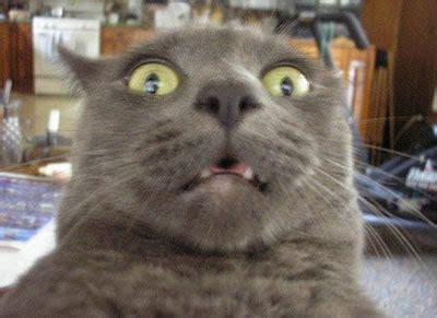 Shocked Cat Meme - shocked cat meme