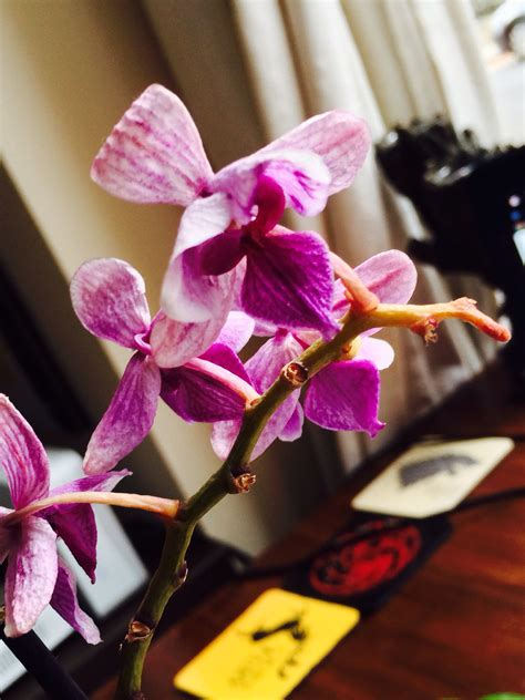 image gallery orchid flowers are wilting