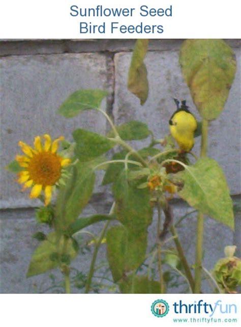 sunflower seed bird feeders thriftyfun