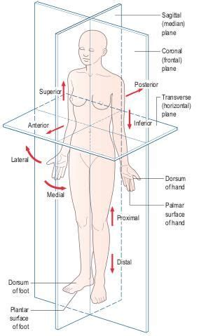 body orientation direction planes and sections 25 best ideas about radiology on pinterest radiology