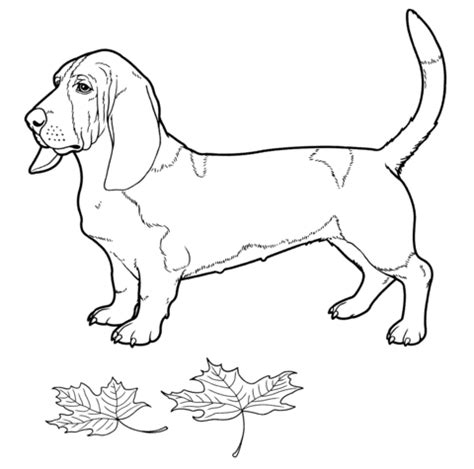 coloring pages hound dog hound dog coloring coloring pages