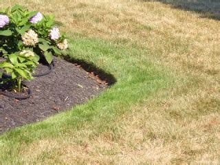 how to edge flower bed proper edging of flower beds home construction improvement