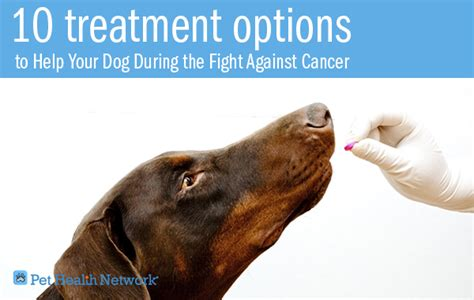 the cancer cure diet for dogs using the ketogenic diet to prevent treat and cure cancer in your furriest family member books 10 treatment options to help your during the fight