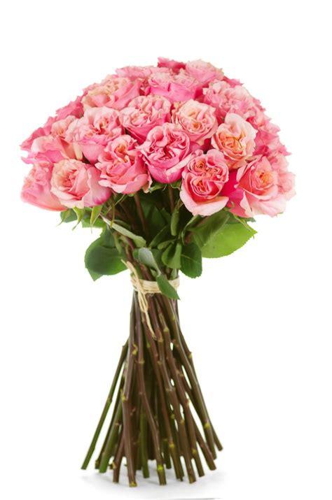 Mayra Flower mayra garden roses flower explosion