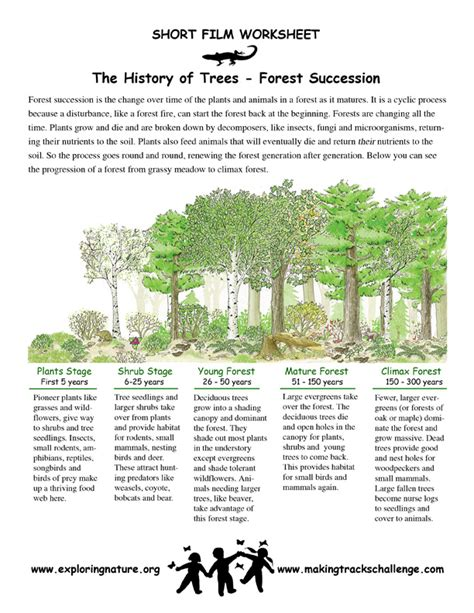 Ecological Succession Worksheet by Succession Worksheet Resultinfos