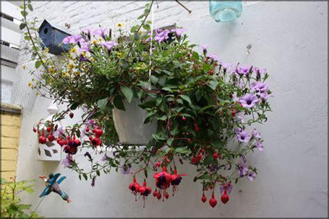 best indoor hanging plants indoor hanging plants