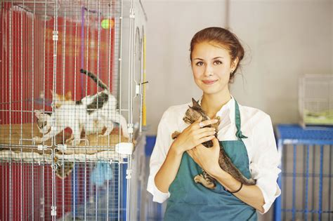 part time near me no experience animal rescue archives springbrook animal care center