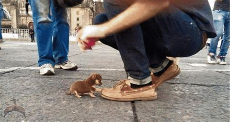 would you step on a puppy for 18 billion would you step on a puppy for 18 billion naira ọmọ o 242 du 224