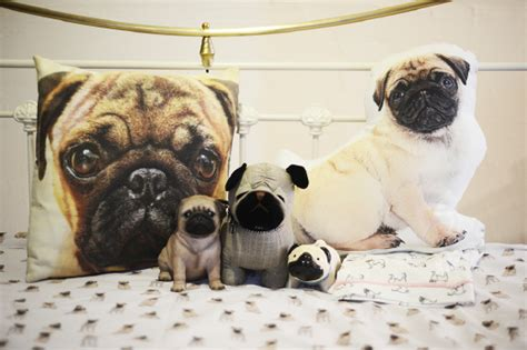 how much to buy a pug breeds 11 things only pug understand metro news