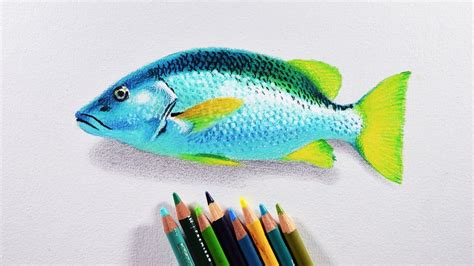 drawing with colored pencils how to draw a fish prismacolor colored pencils tutorial