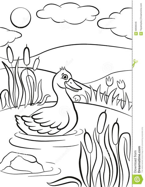 coloring pages of ducks in a pond little cute duck swims on the pond it s smiling stock