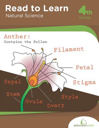 Pdf New Science Learning Learn Harmony by 1st Grade Science Workbook Pdf Spectrum Writing Pdf