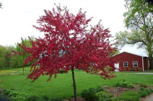 crab apple tree http www gardenguides com 77763 care crabapple trees html my trees and