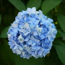 light blue flowers by dseomn on deviantart