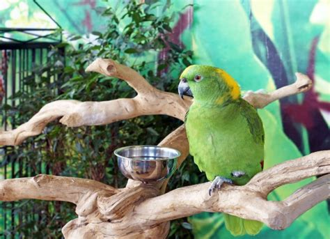 yeast infection  birds petmd