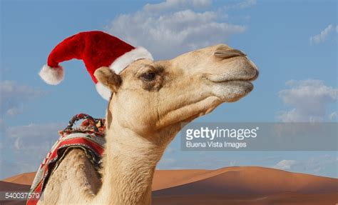 merry christmas in arabic stock photos and pictures