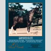 cryptorchidism-in-horses