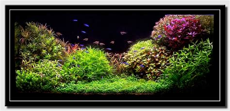aquascape world aquascape of the month july 2008 quot silence 231 a pousse quot aquascaping world forum