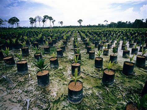 coco wikipedia indonesia aceite de palma una amenaza para la biodiversidad ecosof 237 a
