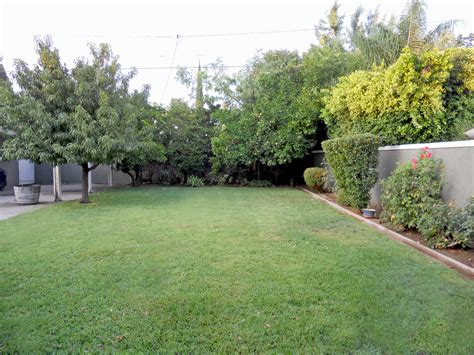 trees for the backyard garden design 22188 garden inspiration ideas