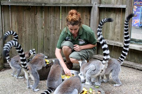 Zoo Keeper by Paradise Zoo News How To Become A Zookeeper