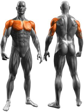 what muscles does benching work decline dumbbell press chest exercises exercise guides
