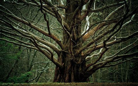 branch wallpaper tree branch wallpaper